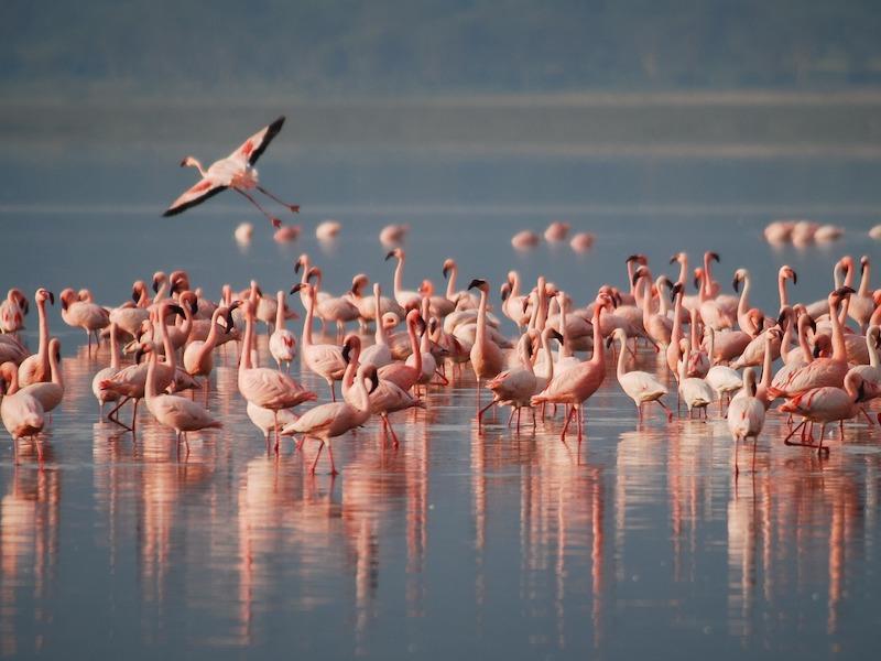 flamingos-spotten-curacao