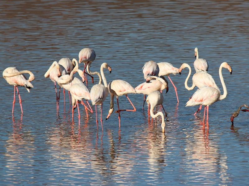 flamingos-curacao