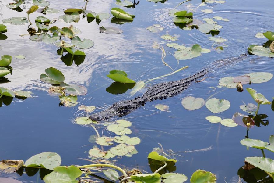nationale-parken-everglades-national-park